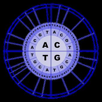Adn, Los Aminoácidos, La Biología