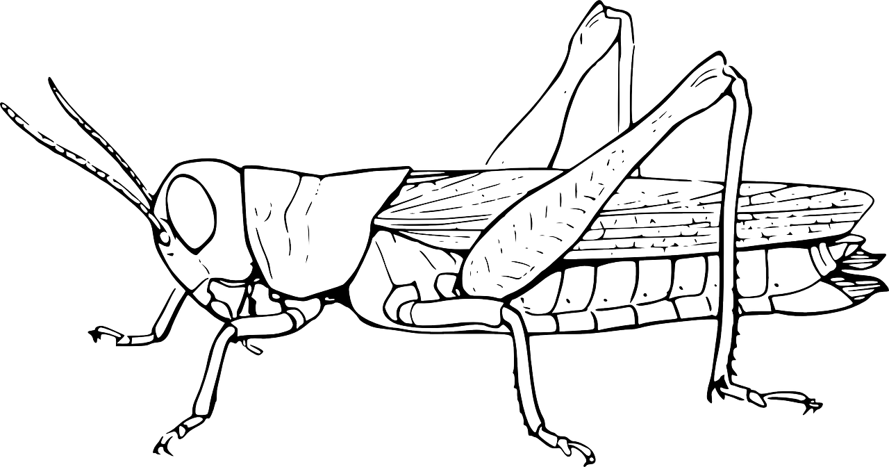 Grasshopper Locust Hopper Free Vector Graphic On Pixabay