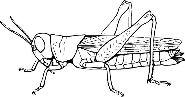 Grasshopper locust hopper free vector graphic on pixabay - Sauterelle dessin ...