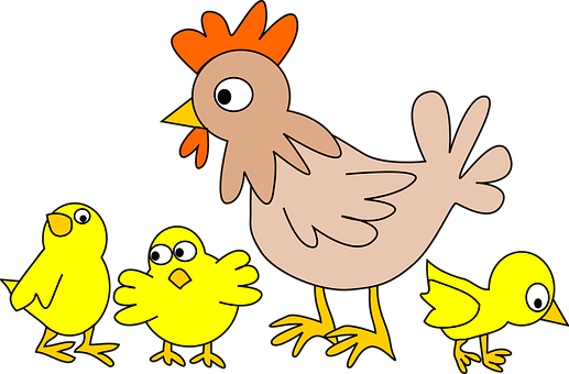 Aves De Capoeira, Frango, Animal