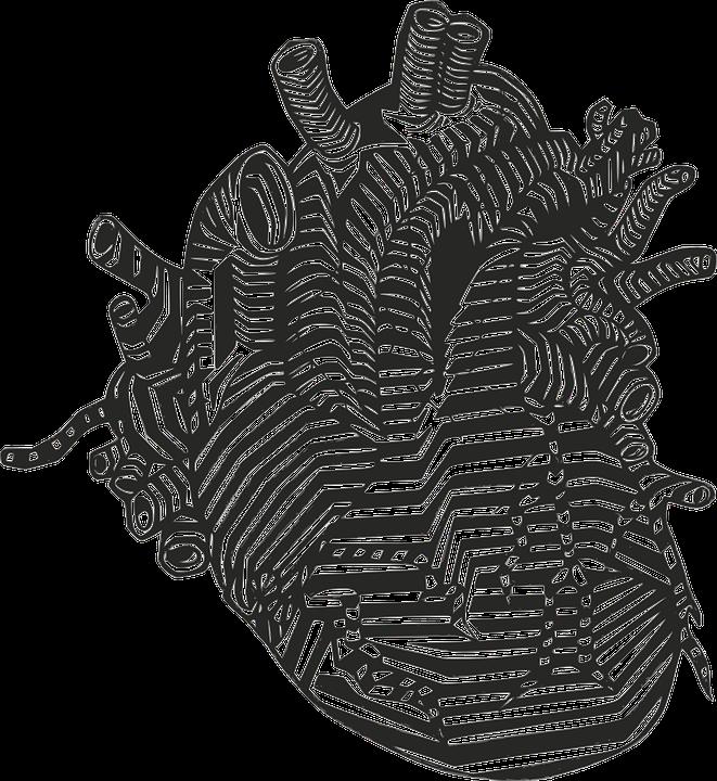 Free vector graphic: Heart, Veins, Arteries, Anatomy ...