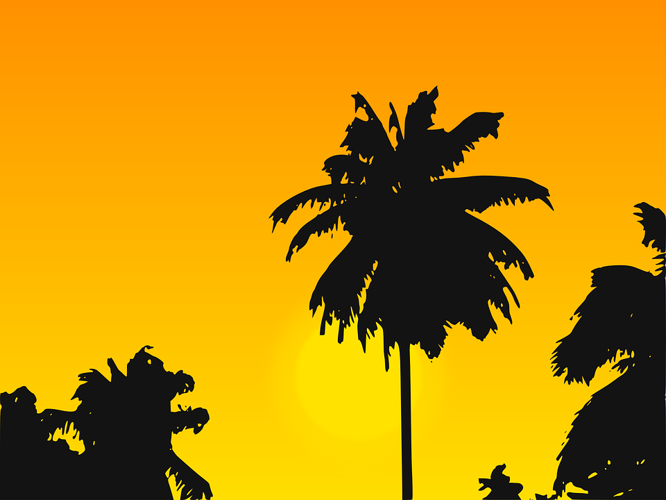 caribbean palm tree palms free vector graphic on pixabay