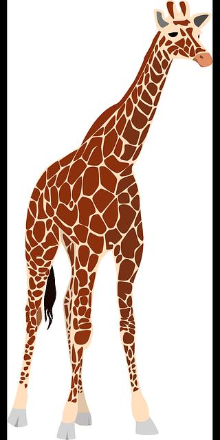 Free vector graphic giraffe nature africa safari - Dessin de girafe en couleur ...