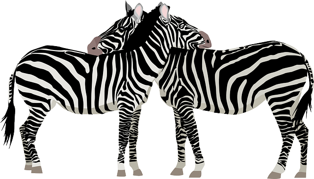 Zebras Africa Safari · Free vector graphic on Pixabay