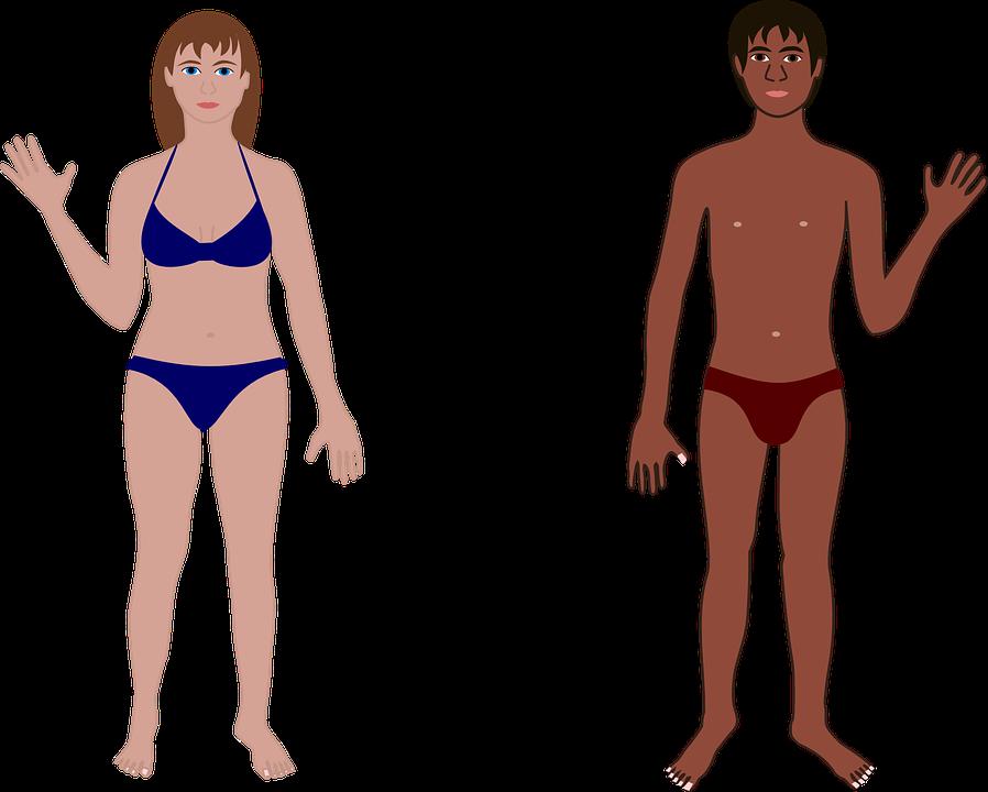 Menschliche Mann Frau · Kostenlose Vektorgrafik auf Pixabay