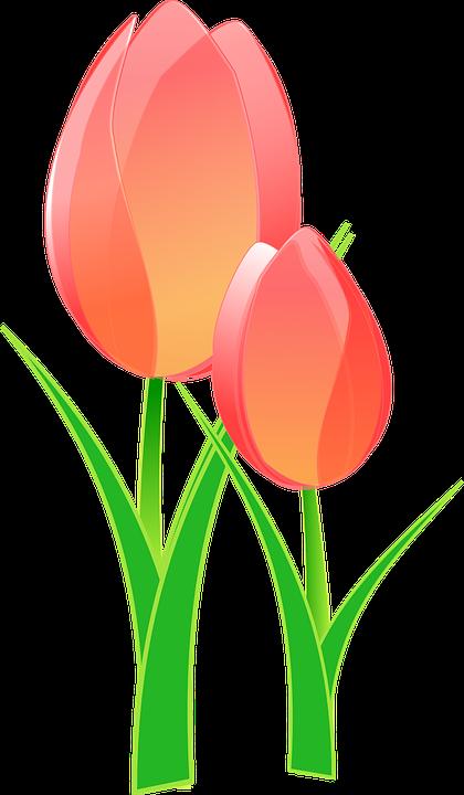 Tulip Bulat Bunga Gambar Vektor Gratis Di Pixabay