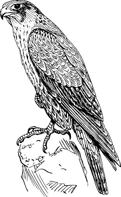 free vector graphic hawk  raptor  bird of prey  animal music vectors free music vector clipart