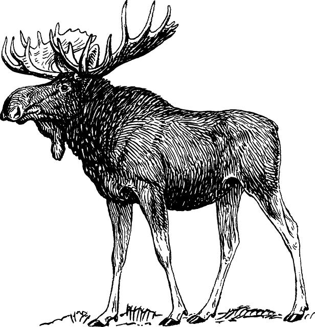 Image De Art Deer And Drawing: Free Vector Graphic: Moose, Elk, Reindeer, Antlers