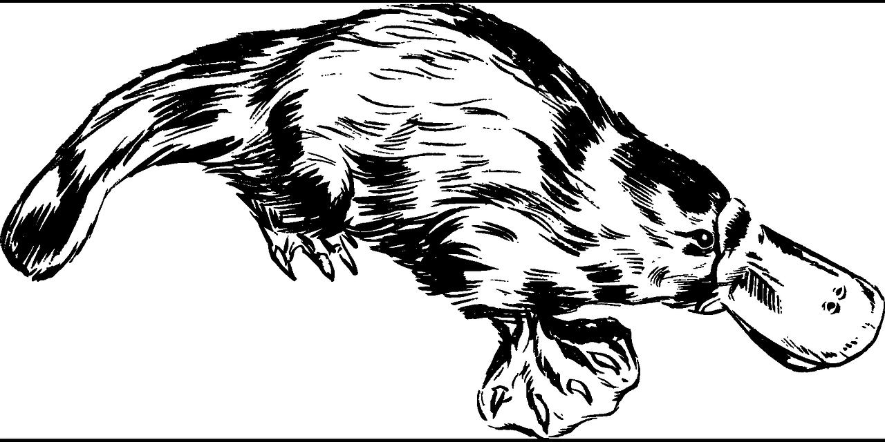 鸭嘴兽:澳大利亚最原始的、未完全进化的哺乳动物之一!_财经头条
