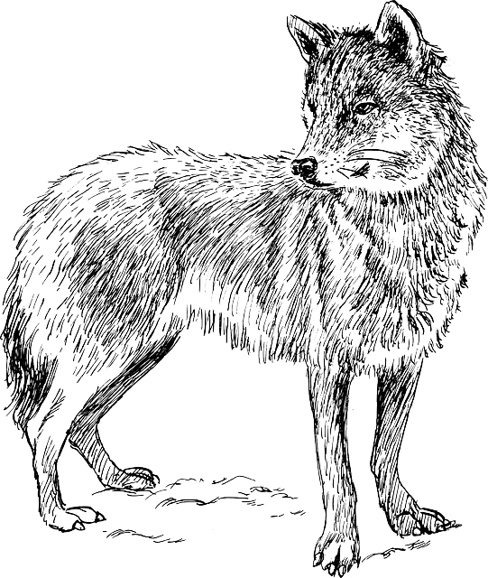 free vector graphic wolf animal biology canine free image on pixabay 153810. Black Bedroom Furniture Sets. Home Design Ideas