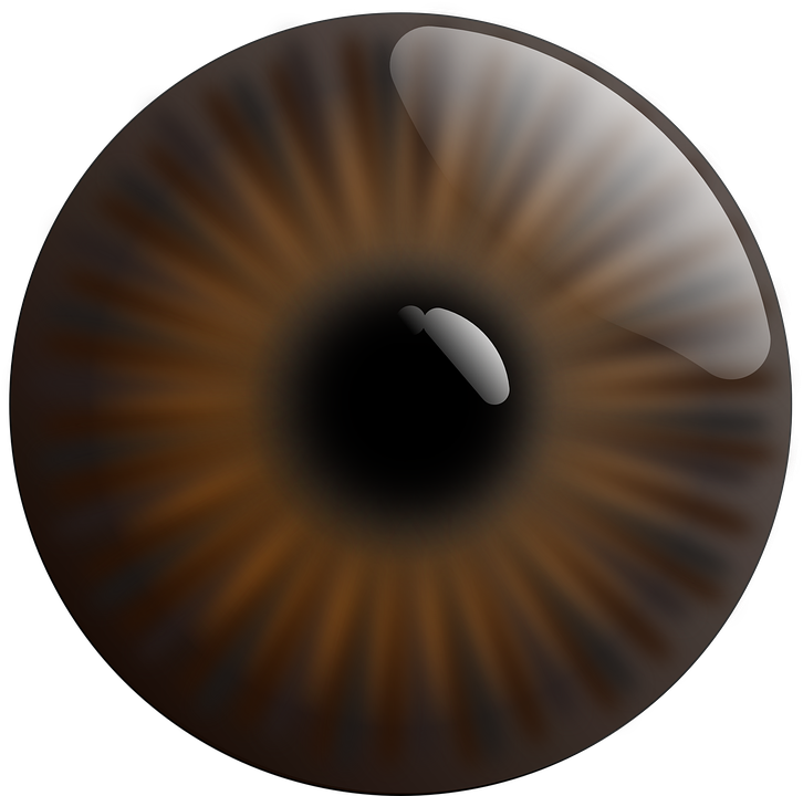 Free Vector Graphic Eye Realistic Iris Brown Pupil