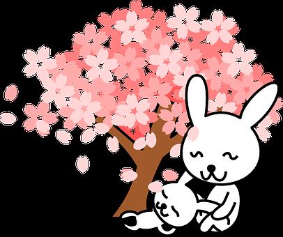 ウサギ, シュガーバ ニーズ, 動物, かわいい, ツリー, 桜の木, 桜の花