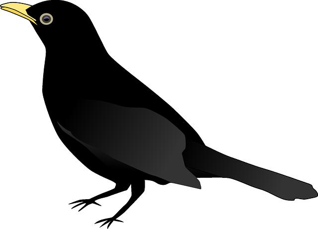 free vector graphic blackbird raven crow animal free