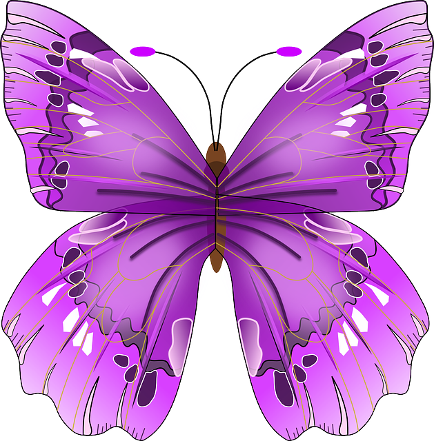 butterfly-154673_640.png