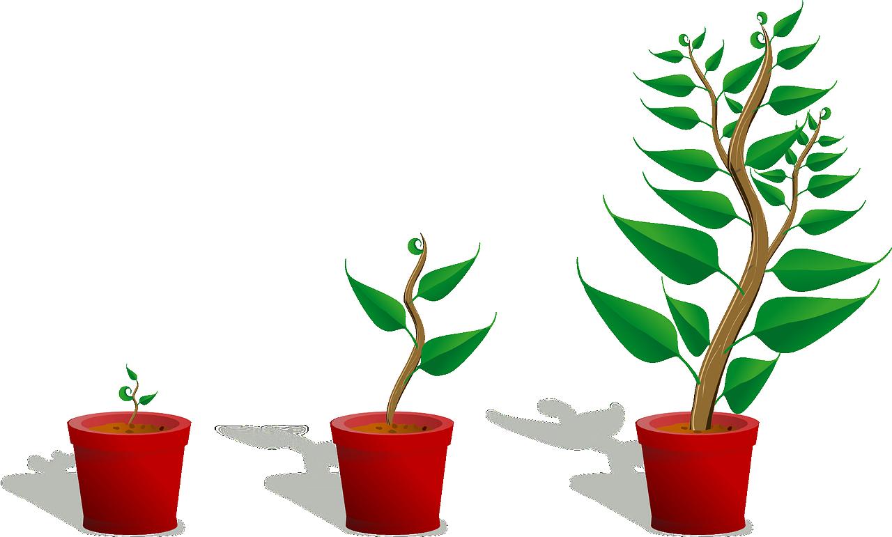 Wachstum der anderen Art