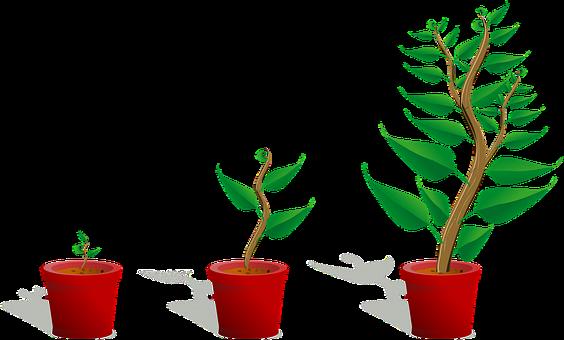 Sapling, Plant, Growing, Seedling
