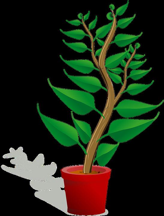 vector gratis: planta de semillero - imagen gratis en pixabay - 154735