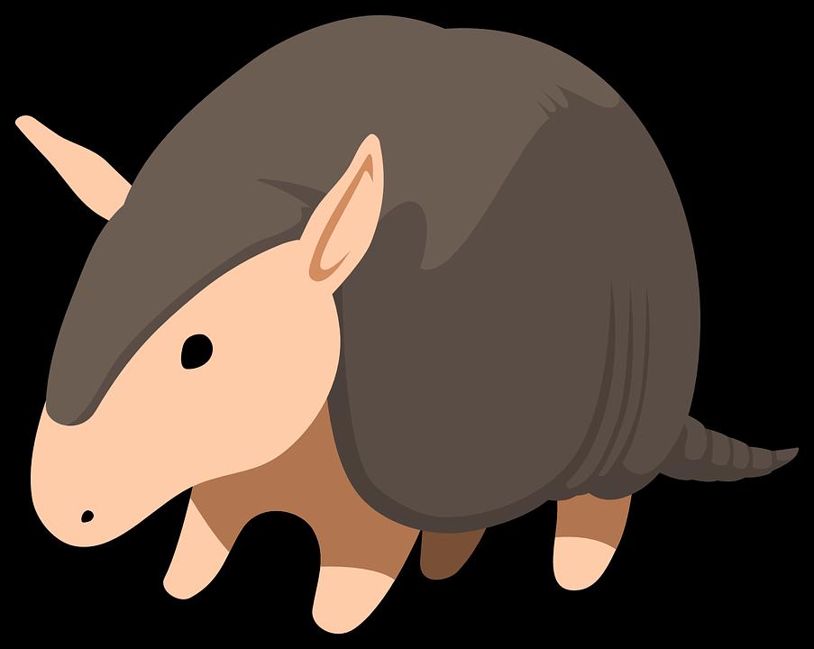 armadillo animal · free vector graphic on pixabay
