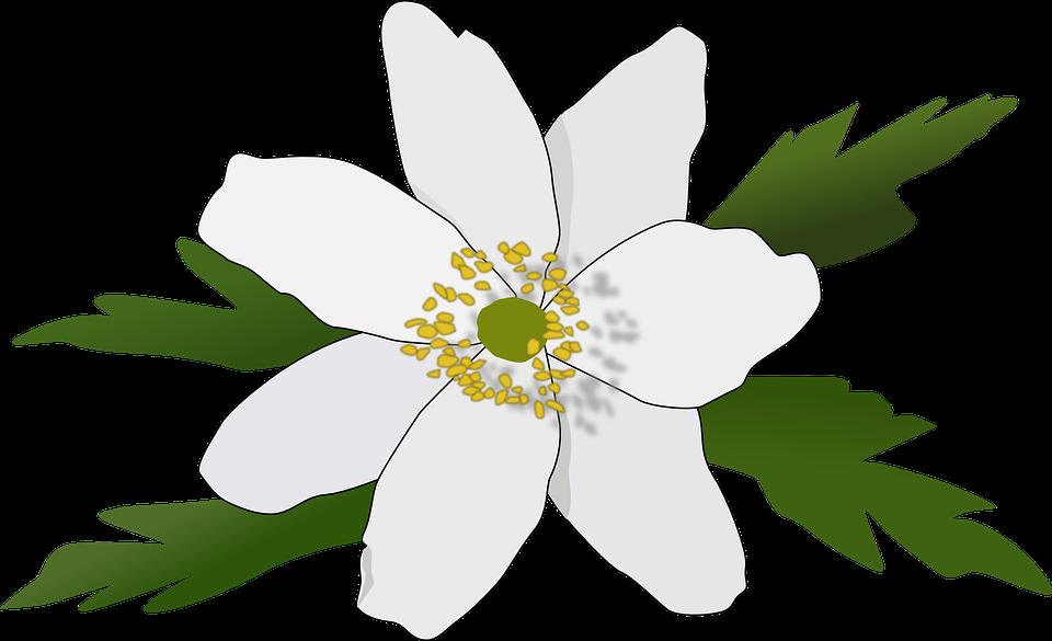 Anemone, Fiore, Bloom, Impianto, Primavera
