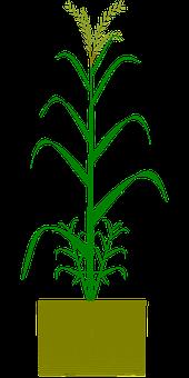 50 Free Ricing Rice Vectors Pixabay