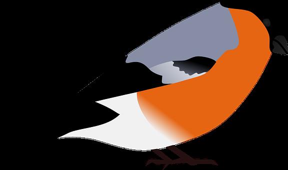 Bullfinch, Finch, Bird, Animal