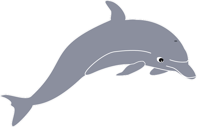 dolphin jumping animal 183 free vector graphic on pixabay