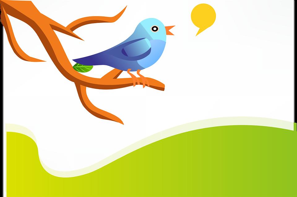 Tweet, Twitter, Vogel, Blau, Zweig, Grün, Hügel, Natur