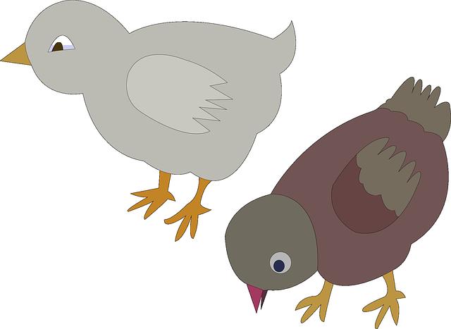 600 Koleksi Gambar Binatang Kartun Ayam Gratis Terbaik