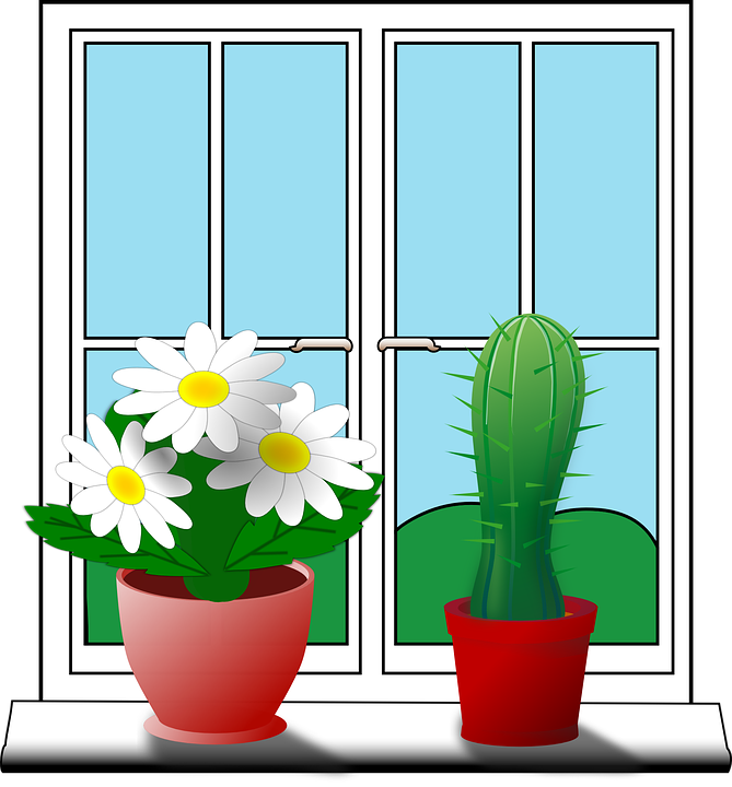 Lovely Windowsill Cactus Flower House Potted Plants Room