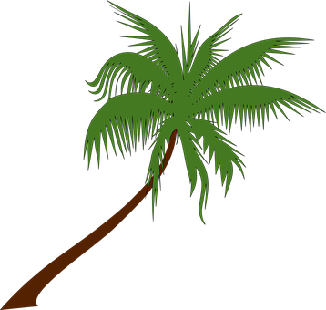 Palm Tree, Coconut, Palm, Tree, Tropical