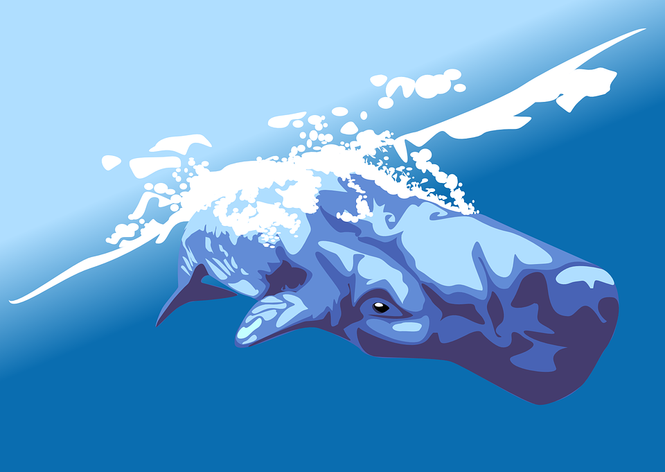 Whale Pot Cachalot Sperm · Free vector graphic on Pixabay