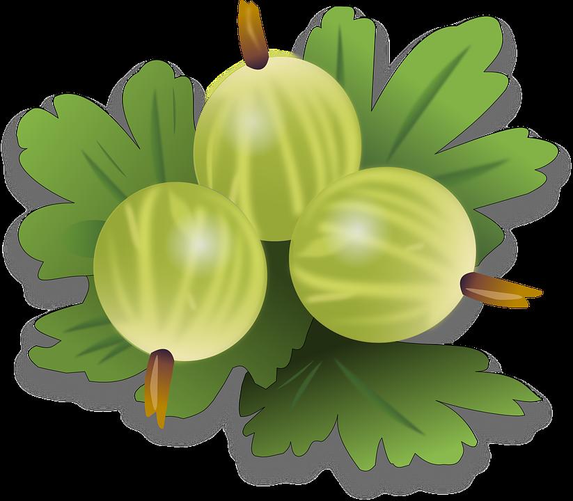 Sweet Bush Plant