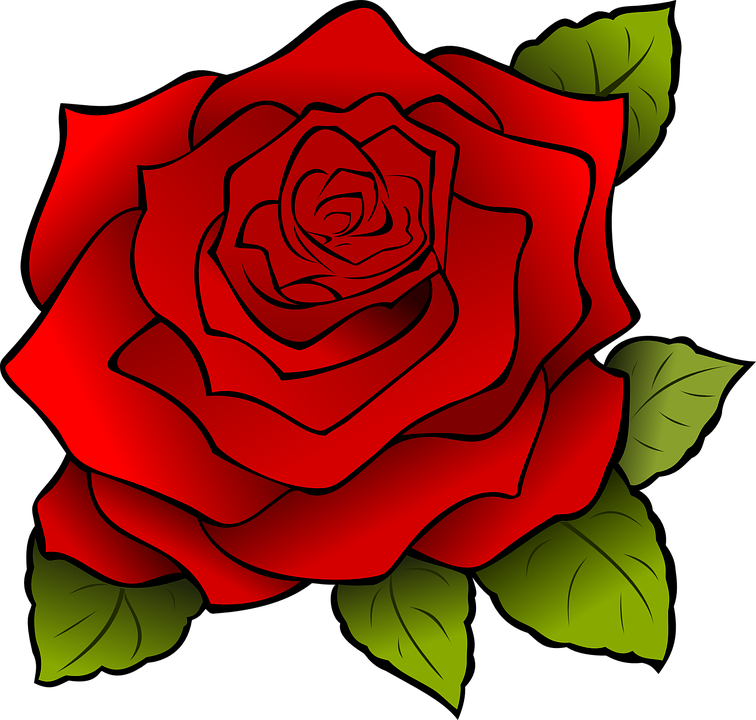 Blume, Rose, Pflanze, Rote Rose, Rote Blume, Blüte