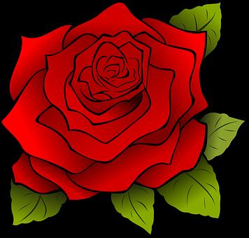 40 000 Rose Images Photos Hd Pixabay