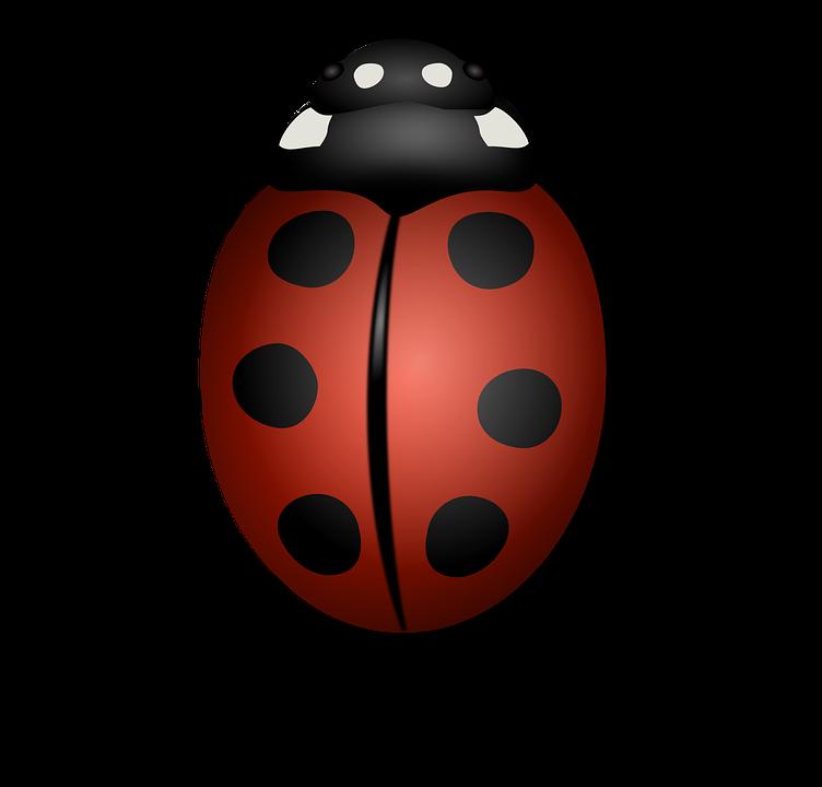 Mariquita, Animales, Escarabajo, Escarabajo, Insecto