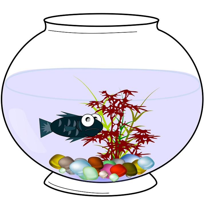 Aquarium Fish Fishbowl Free Vector Graphic On Pixabay