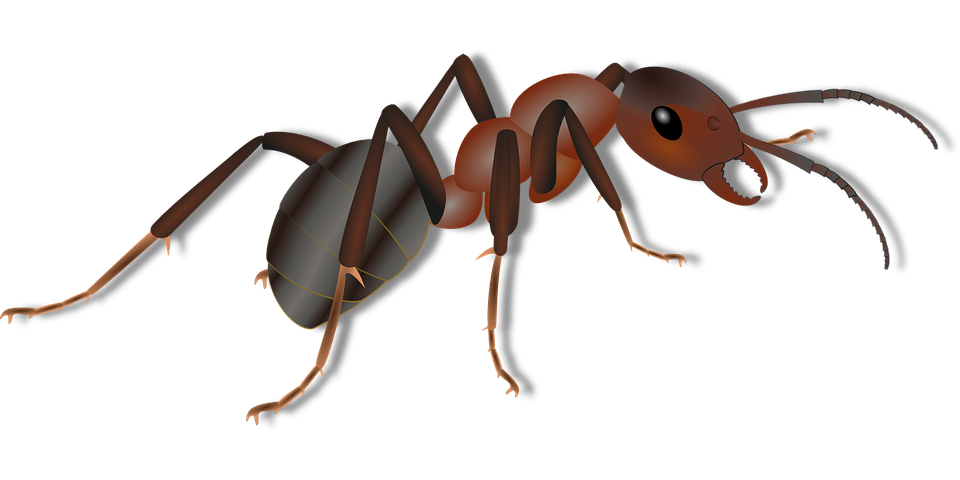 Ant Free pictures on Pixabay