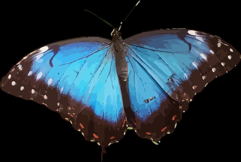 Super Image vectorielle gratuite: Des Animaux, Papillon, Insectes  UT28