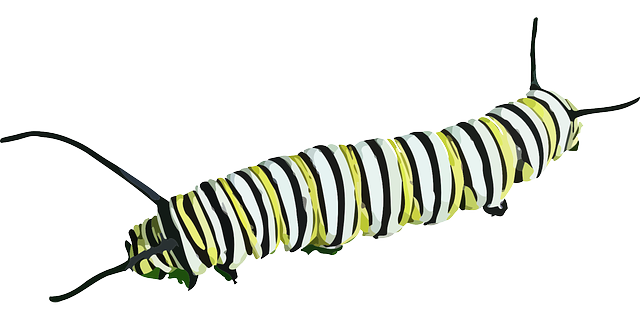 Caterpillar Insect Butterfly · Free vector graphic on Pixabay