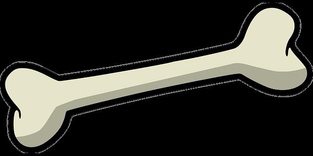 Crushed Human Bone : Kemik köpek · pixabay da ücretsiz vektör grafik