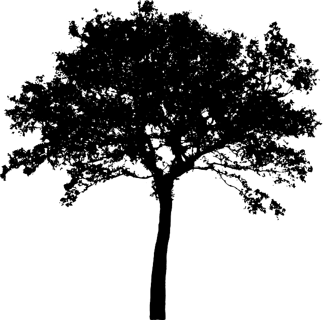 Tree Bush Nature 183 Free Vector Graphic On Pixabay