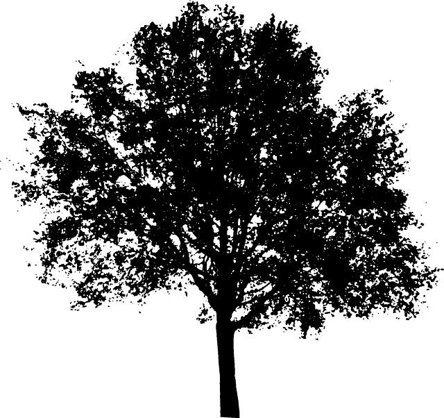 Tree  Bush Nature Free vector graphic on Pixabay