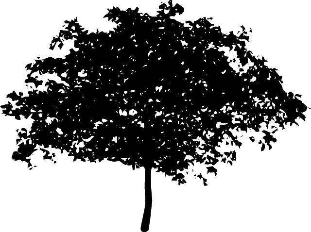 Tree Bush Nature 183 Free Vector Graphic On Pixabay