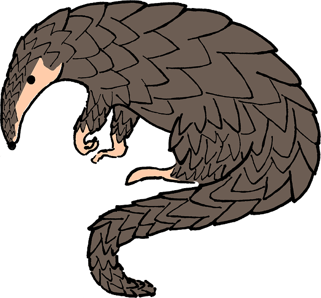Animal Pangolin 183 Free Vector Graphic On Pixabay