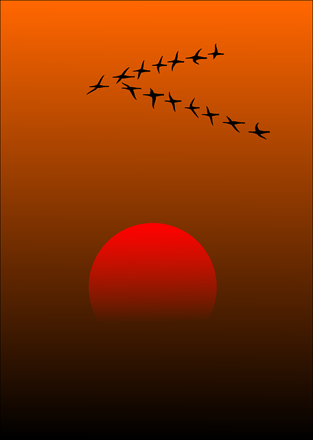The Wild Goose >> Free vector graphic: Migratory Birds, Birds, Sunset, Sun - Free Image on Pixabay - 157638