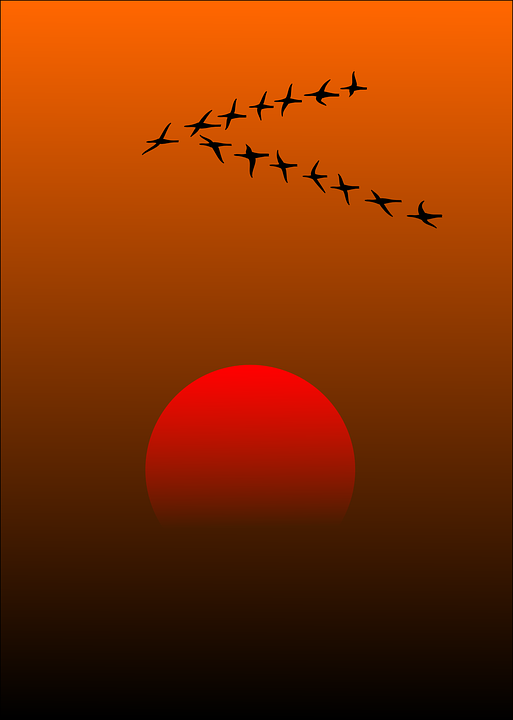 free vector graphic migratory birds birds sunset sun