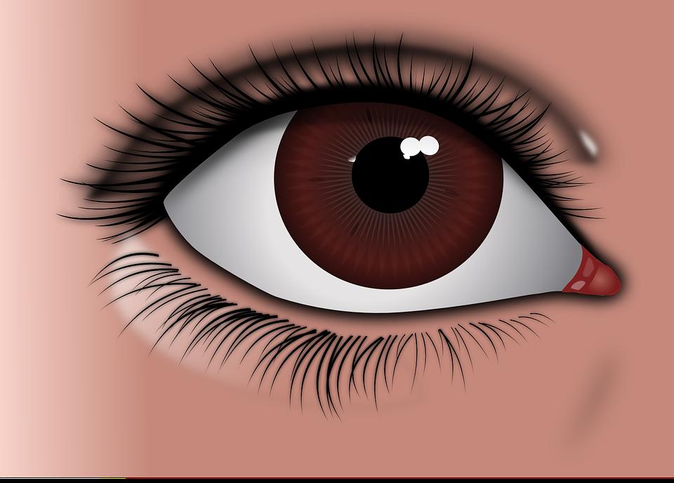 eye brown · free vector graphic on pixabay
