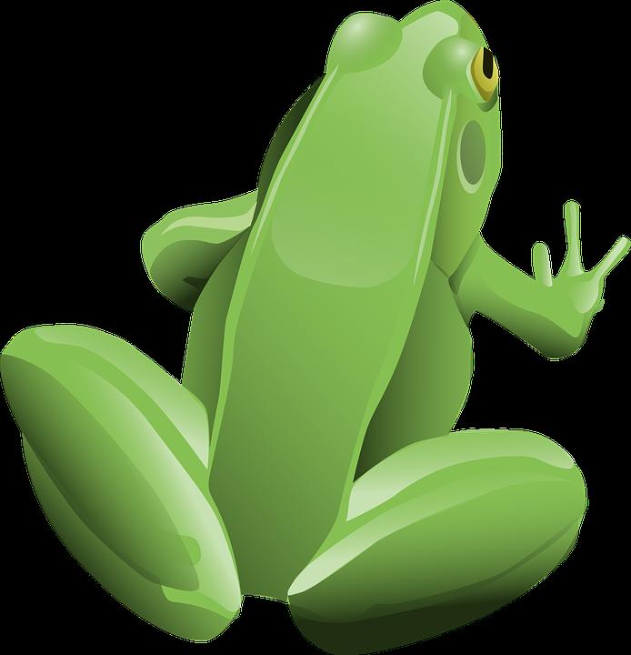 Rana, Anfibios, Animales, Verde, Rana De Árbol Verde
