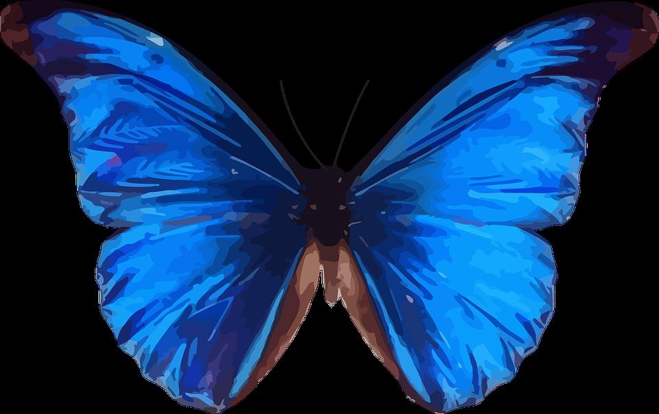 Célèbre Image vectorielle gratuite: Des Animaux, Papillon, Insectes  EG41