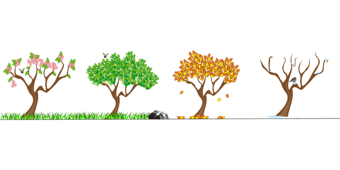 Seasons, Four Seasons, Tree, Nature
